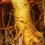Fresh Cultivated Ginseng